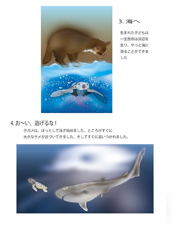『アカウミガメの物語』画像02